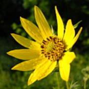 Bright Yellow Flower Art Print