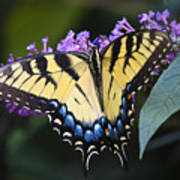 Brilliant Butterfly Art Print