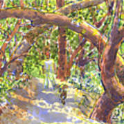 Briones Forest Near Springhill Road Art Print