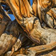 Bristle Cone Pine Tree White Mtns Ca Color Img 6799 Art Print