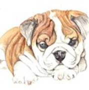 British Bulldog Puppy  Art Print