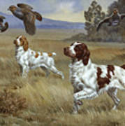 Brittany Spaniels Flush Three Birds Art Print