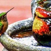 Broad-tailed Hummingbird At Water Fountain Art Print