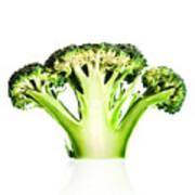 Broccoli Cutaway On White Art Print