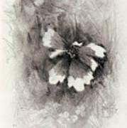 Broken Blossom Art Print
