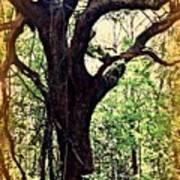 Broken Branch Art Print