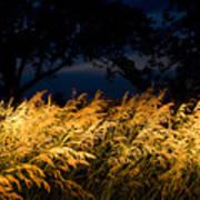 Brome Grass In A Field Near Princeton Art Print