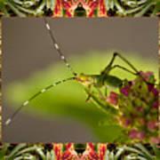 Bromeliad Grasshopper Art Print