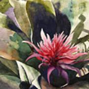 Bromiliad Art Print