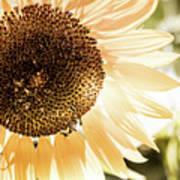 Bronze Sunflower Art Print
