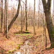 Brook In The Woods Art Print