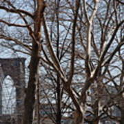Brooklyn Bridge Thru The Trees Art Print