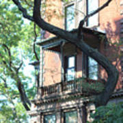 Brooklyn Building And Tree Art Print