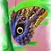Brown And Blue Butterfly 2 Art Print