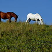 Brown And White Horse Grazing Together In A Grassy Field Art Print
