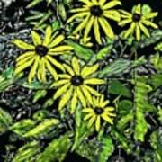 Brown-eyed Susans II Art Print