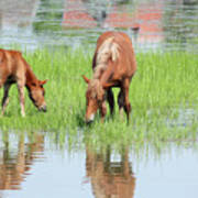 Brown Horse And Foal Nature Spring Scene Art Print