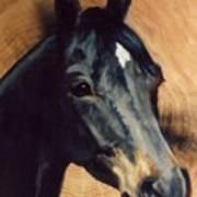 Brown Horse  Tingeys Star Art Print