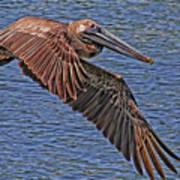 Brown Pelican Flyby Art Print