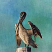 Brown Pelican - Fort Myers Beach Art Print