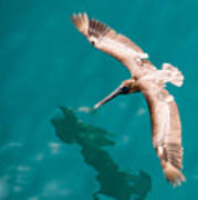 Brown Pelican Offshore Art Print