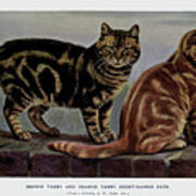 Brown Tabby And Orange Tabby Art Print