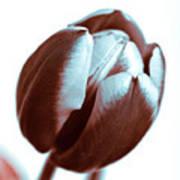 Brown Tulip Art Print