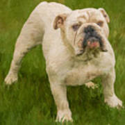 Bruce The Bulldog Art Print
