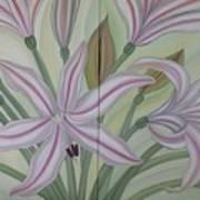Brunsvigia Grandiflora Art Print