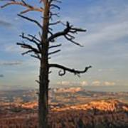Bryce Canyon Dead Tree Sunset 3 Art Print