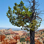 Bryce Canyon Fairyland Point Portrait Art Print