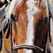 Bryce Canyon Horseback Ride Art Print