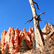 Bryce Canyon Lonely Tree Art Print