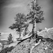 Bryce Canyon Treescape Art Print