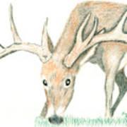 Buck Feeding Art Print