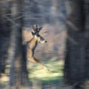 Buck Running Thru The Woods Art Print
