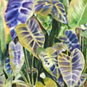 Bucket Of Purple Taro Art Print