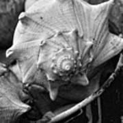 Bucket Of Sea Shells Art Print