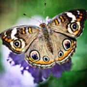 Buckeye Butterfly  Art Print