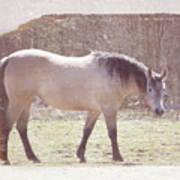 Buckskin Horse  Art Print