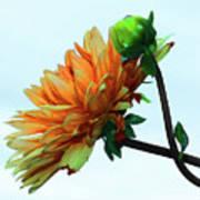 Bud And Blossom Art Print
