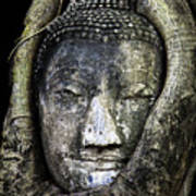 Buddha Head In Banyan Tree Art Print