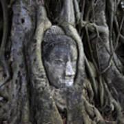 Buddha Head In Tree Art Print by Adrian Evans