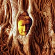 Buddha Of The Banyan Tree Art Print