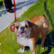 Buddy On A Red Leash Art Print