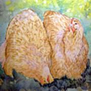 Buff Orpington Hens In The Garden Art Print