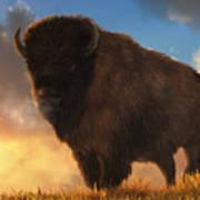 Buffalo At Dawn Art Print