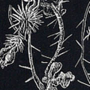 Buffalo Burr And Toad Art Print