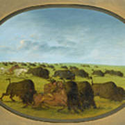 Buffalo Chase With Accidents Art Print