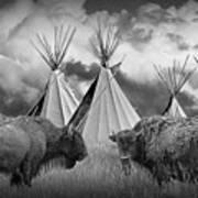 Buffalo Herd Among Teepees Of The Blackfoot Tribe Art Print